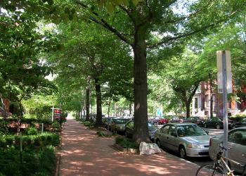 Urban street trees