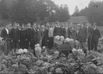 Market gardening class with cabbages in field