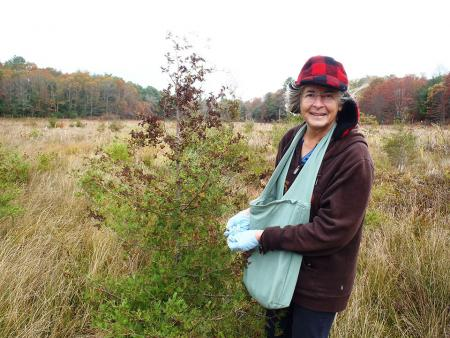 Glorianna Davenport collects white cedar seeds