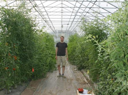 Jacob Barnett in greenhouse with tall tomato plants