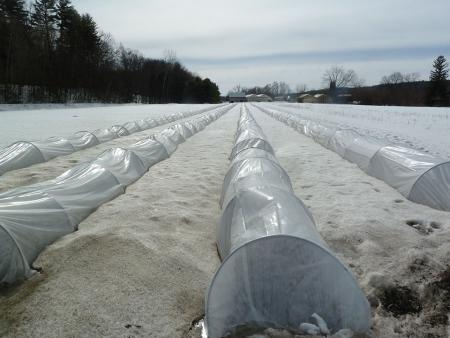 low tunnels in winter