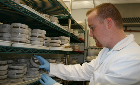Paul Travers conducts research in Plant Cell Culture Library