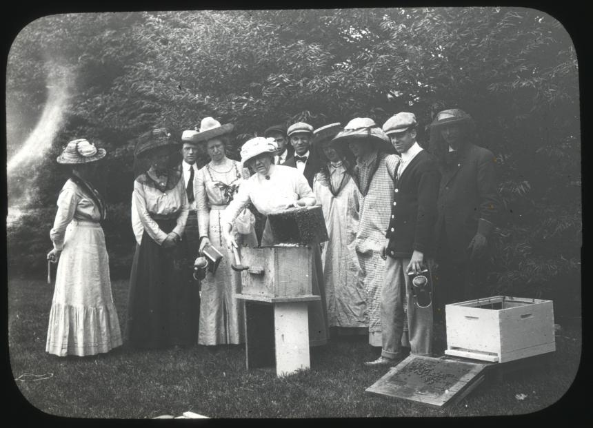 Transferring honeybees, 1911