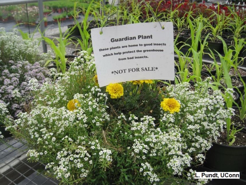 Guardian Plants