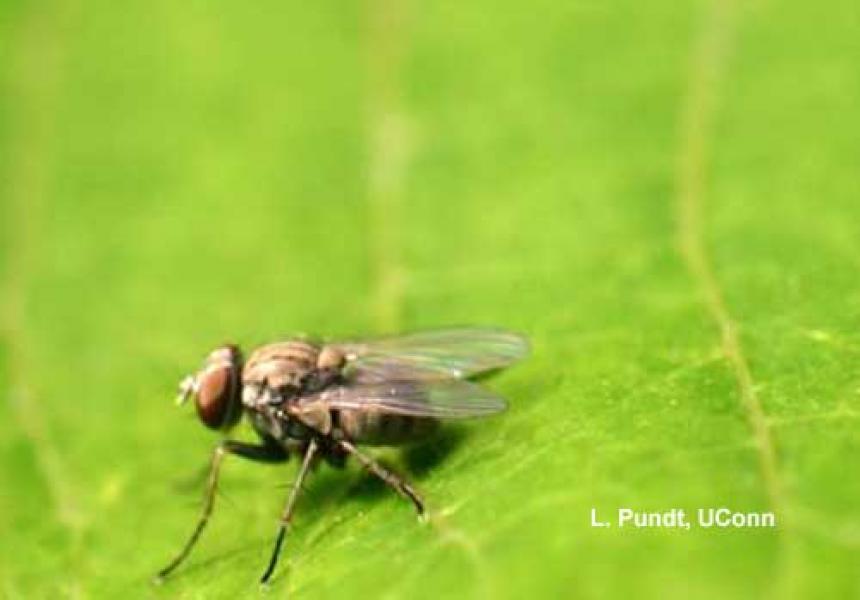 Hunter Fly