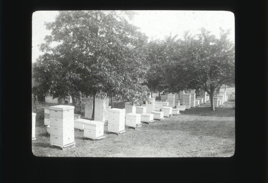 Government Apiary, College Park, Md 1909