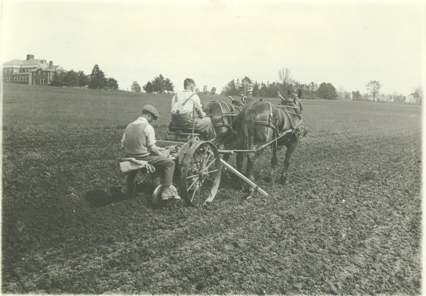 Two men planting potatoes