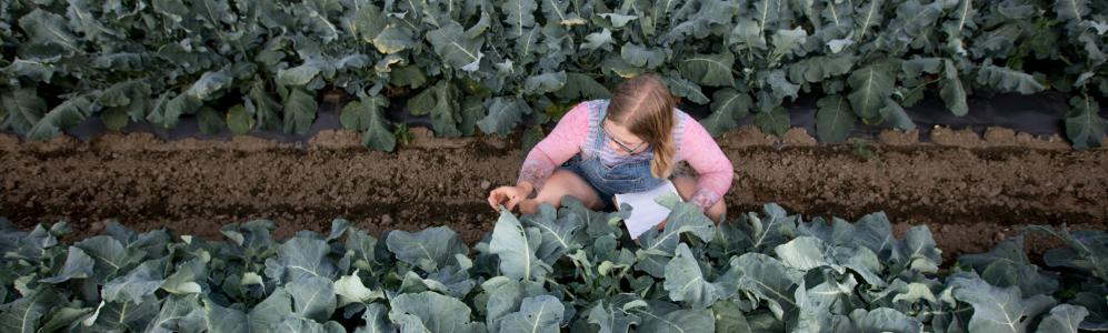 Annalisa Flynn ('20) scouts for cabbage pests