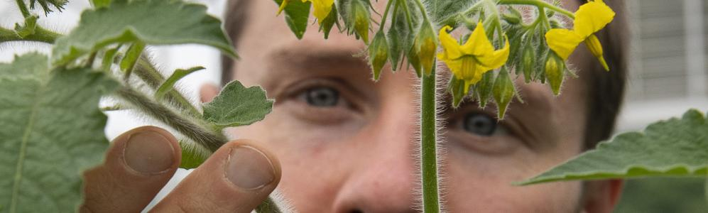 Jacob Barnett examines hairy stem on wild tomato