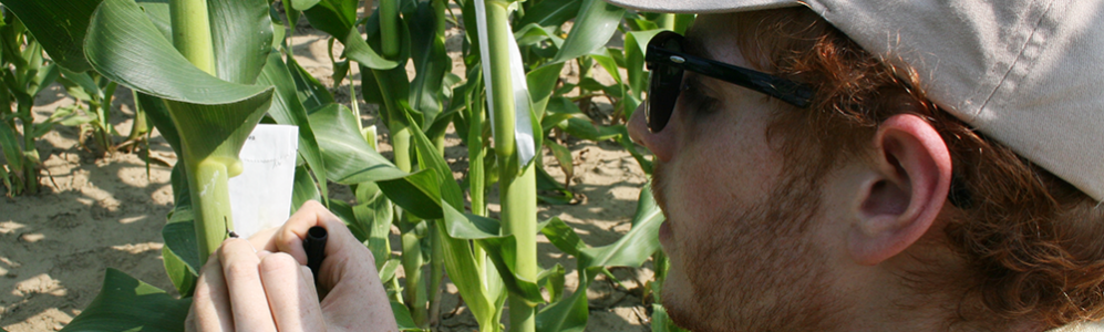 Jeffrey Heithmar tags corn for research about rational crop design