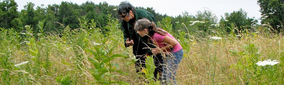 Identifying wildflowers on land near Worcester (photo: GWLT)