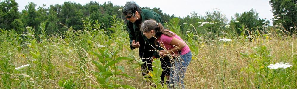 Identifying wildflowers on land near Worcester (photo: GWLT)