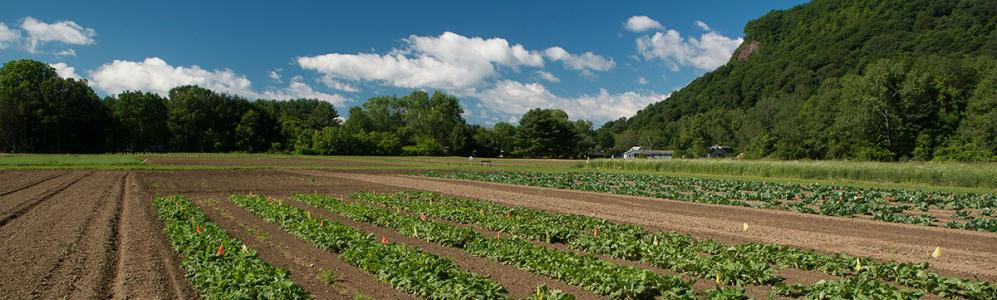 Crops flourish at South Deerfield Crop and Animal Research Education Center