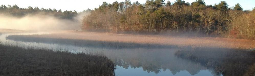 Tidmarsh Farm in fog