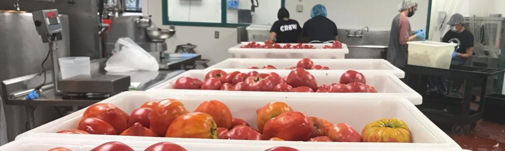 tomatoes being processed at Western Mass Food Processing Center