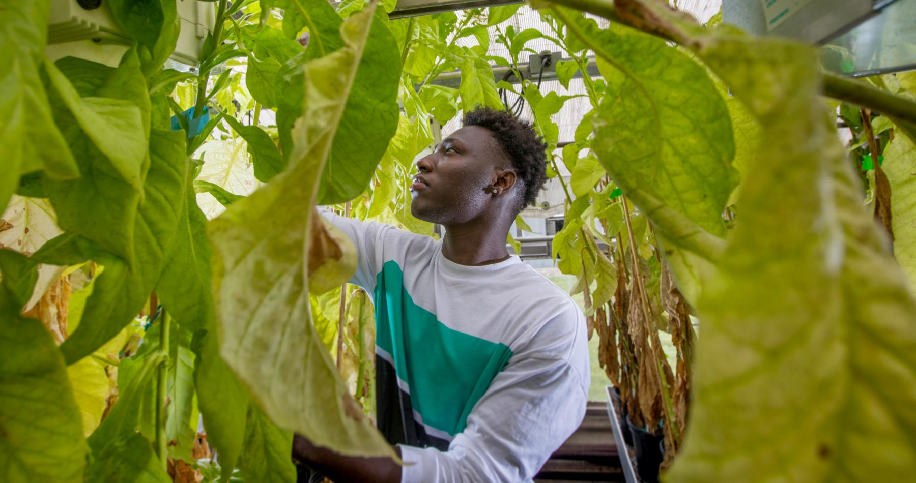 Eugene Amponsah ('19) researches floral chemistry and bee disease resistance