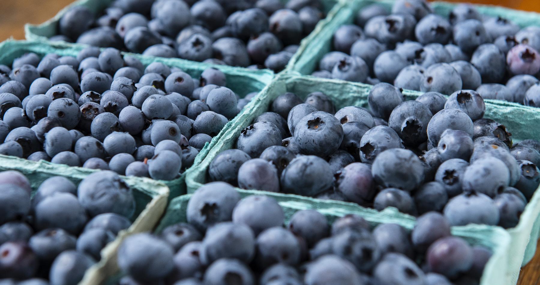 Massachusetts blueberries