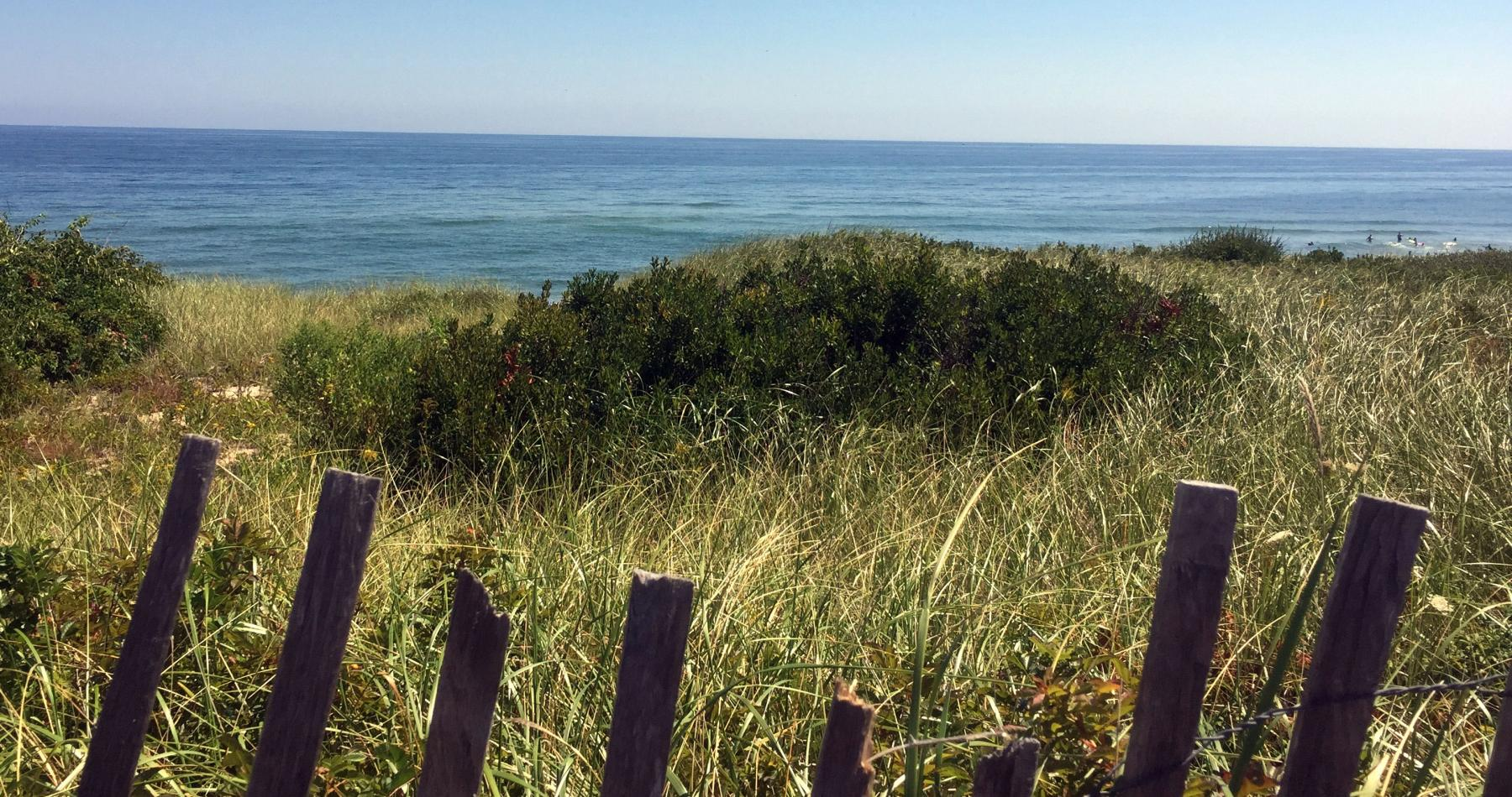Beach grass on Cape Cod. photo: © Shannon Jarbeau