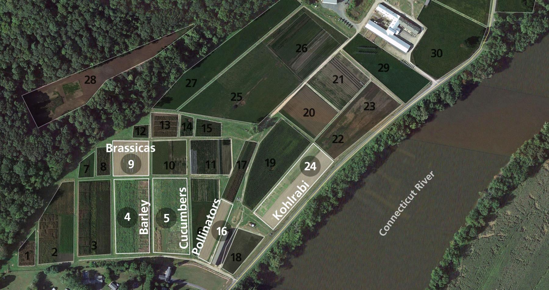 South Deerfield UMass tesearch plots