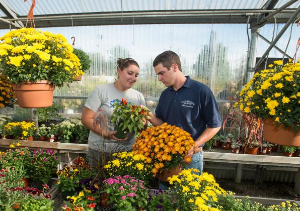 plants in Hadley garden greenhouse