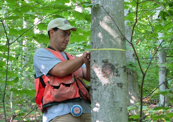 Paul Catanzaro measuring dbh