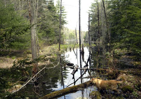 fallen trees in stream