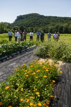 Research plot at South Deerfield Farm