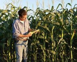 photo of boy in corn field