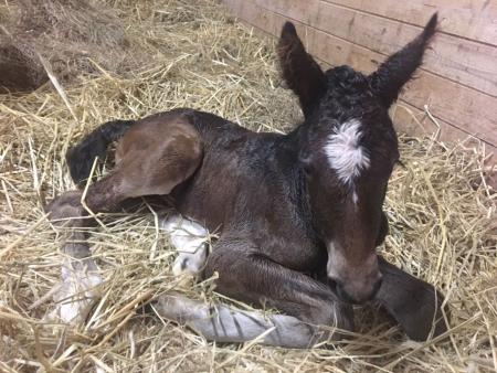 "Foal born at Hadley Farm, nicknamed ""Levi"""