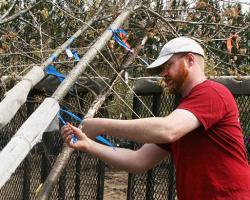 Rick Harper, Assistant Professor, Environmental Conservation, checks stress on trees