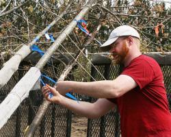 Rick Harper, Assistant Professor, Environmental Conservation, checks stress on trees