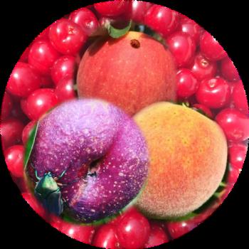 Tree fruit