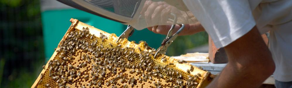 Honey Bee Health and Management