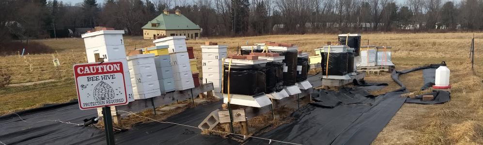 State Apiary in Winter