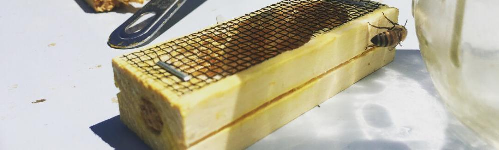 a honey bee queen cage, photo credit: Bryanna Joyce