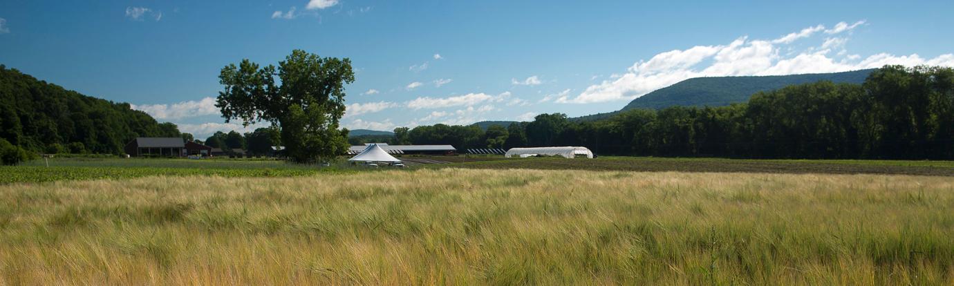 Crop fields at the South Deerfield farm