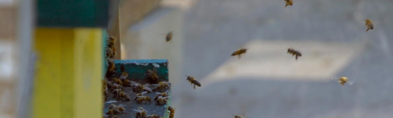 honey bee hive entrance