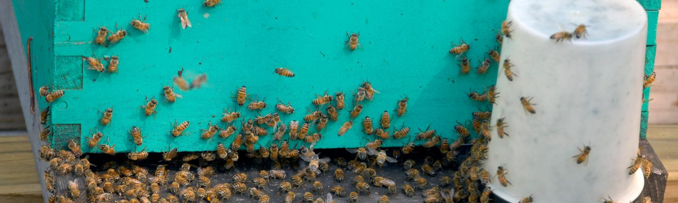 entrance to a hive