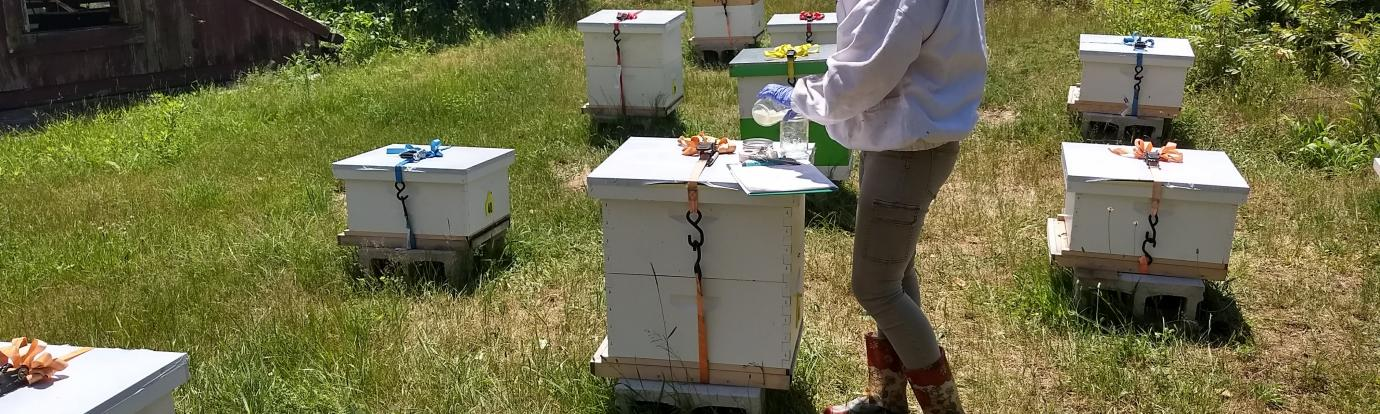 Conducting Research on Hives at UMass Amherst