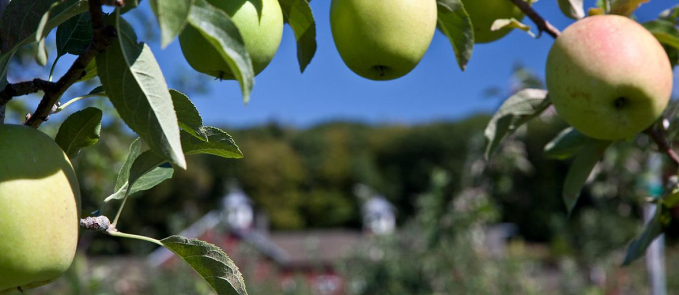 UMass Extension Fruit Program