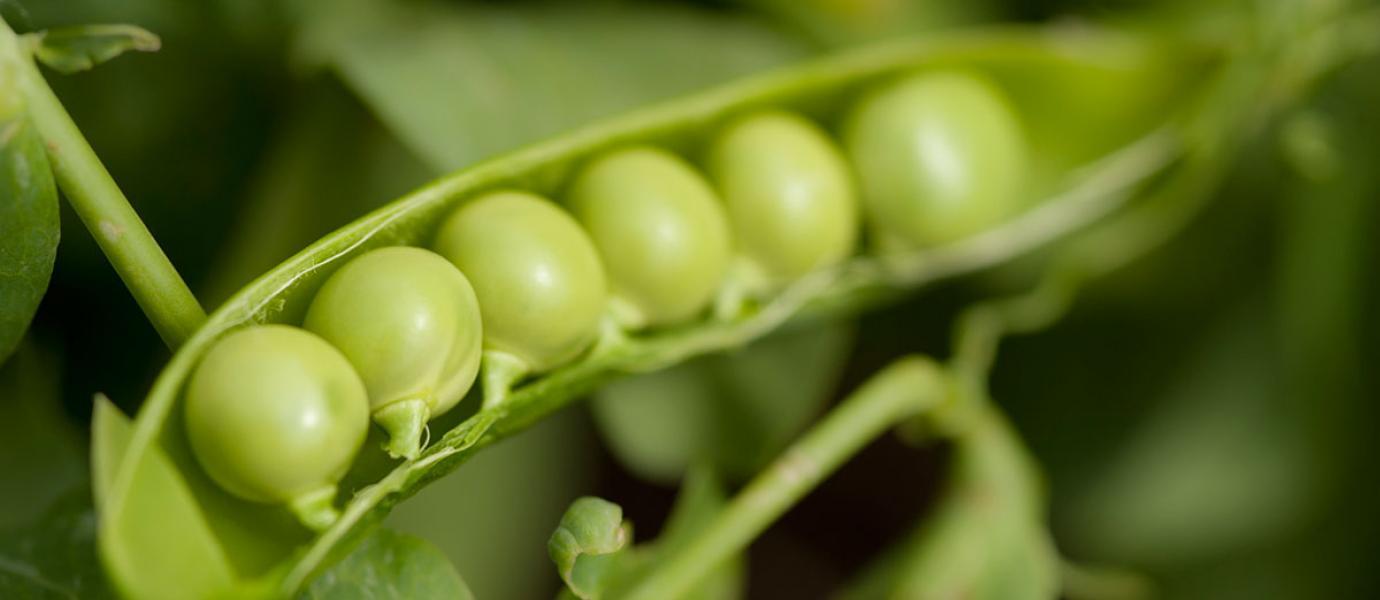 UMass Extension Vegetable