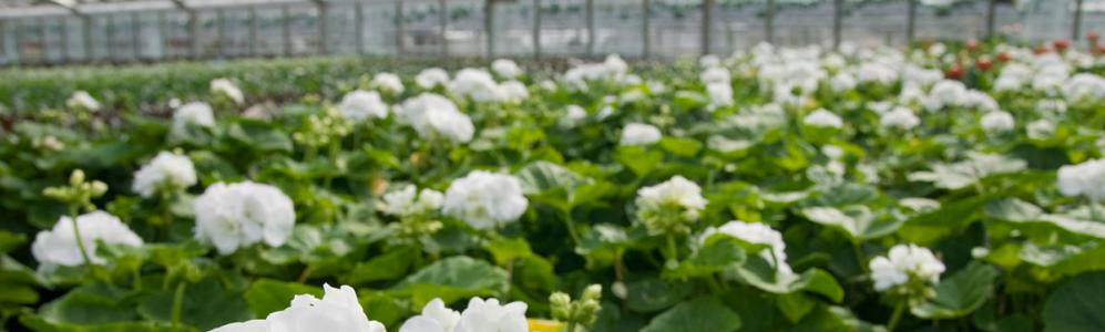 Greenhouse Crops and Floriculture
