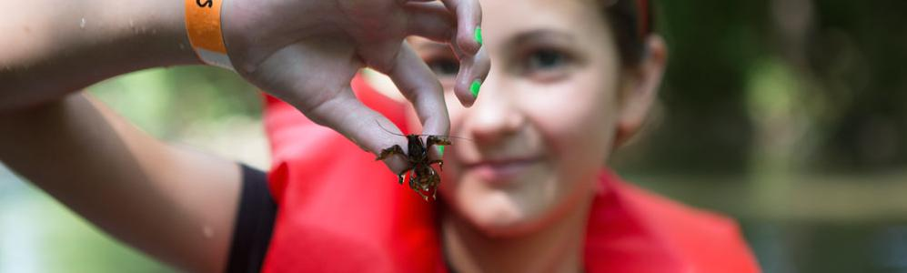 Mass 4-H girl with bug