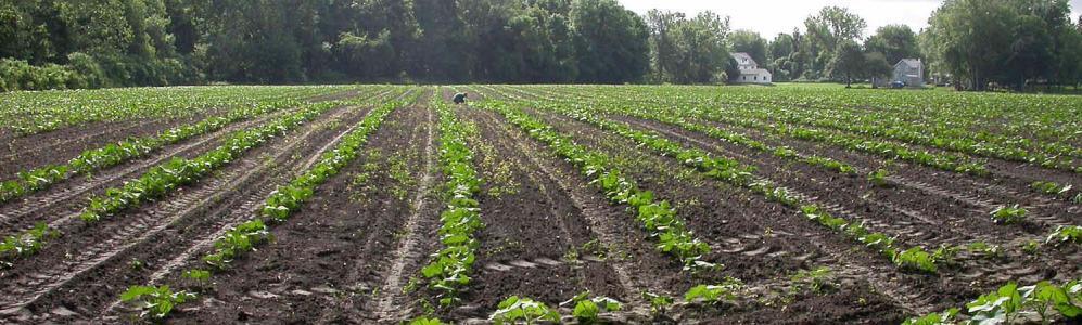 Fields at South Deerfield farm