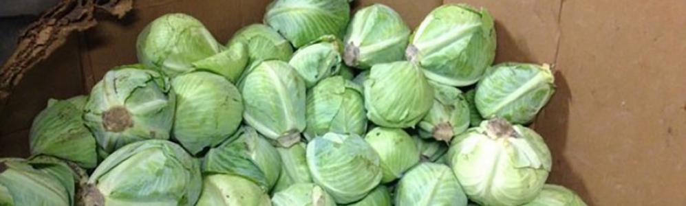 Cabbage in cardboard bin