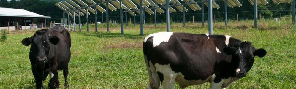 Crops, Dairy, Livestock and Equine