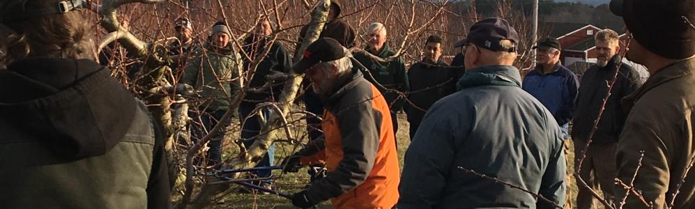 Home Orchard Pruning Photo