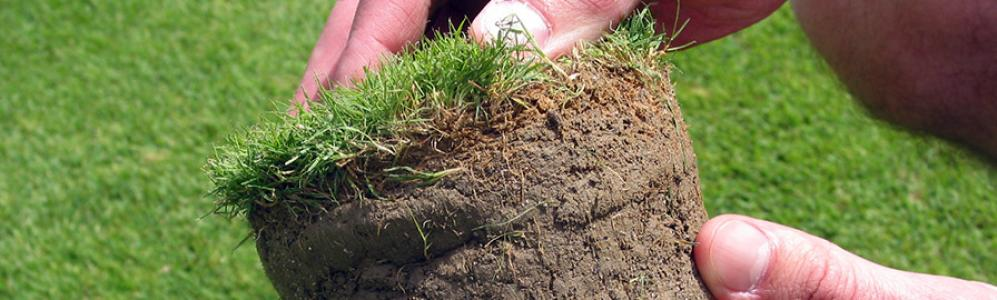 UMass Extension Turf Program