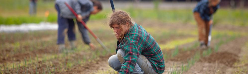Students farming at the Crop and Animal Research and Education Center in South Deerfield